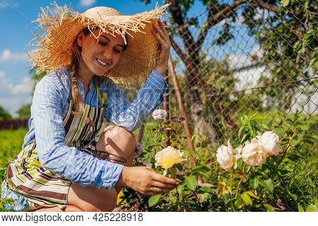 Young Gardener Enjoys Blooming Roses In Summer Garden. Woman Admires Blossoms Of Graham Thomas By Da