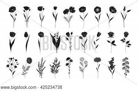 Floral Set, Hand Drawn Flowers Silhouettes. Poppy, Rose, Lily Of The Valley, Lavender, Chamomile And