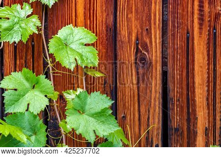 Backdrop, Background, Wall, Textured Surface Made Of Beautiful Wooden Boards Painted With Mastic Wit