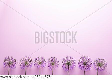 Flatlay Purple Flowers On A Pink Background Minimalism.