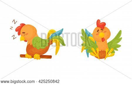 Rooster Funny Character With Bright Feathers Sitting And Sleeping On Perch Vector Set