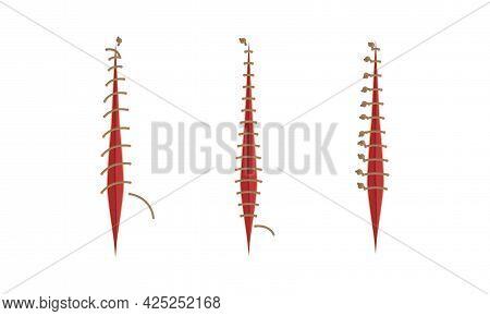 Baseball Stitches And Red Lace With Loop Of Thread Isolated On White Background Vector Set