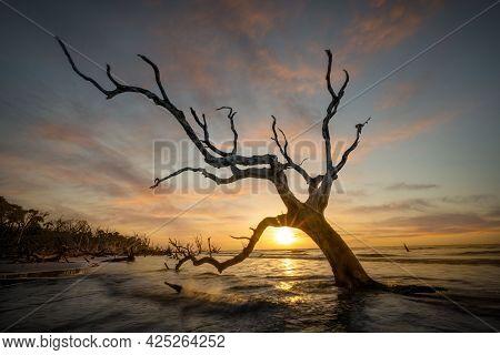 Ocean Sunrise Framed By A Dead Tree On A South Carolina Beach