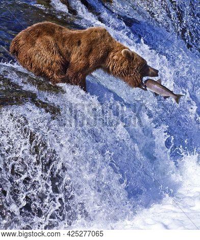 Wild Animal Brown Bear In The Forest. Big Brown Bear. Ursus Arctos.