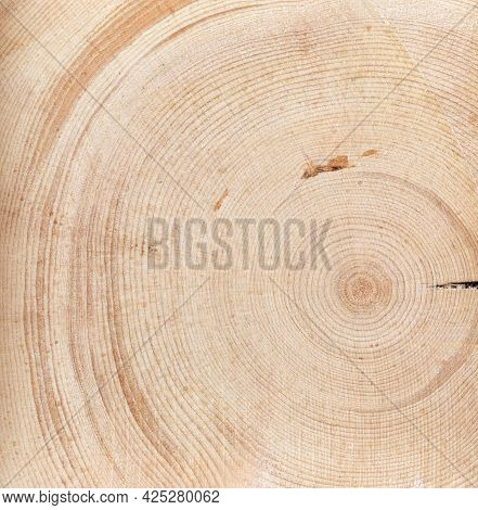 Cross-section Of Tree Trunk Or End Of Log, Macrophotography As Natural Background