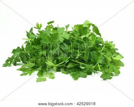 fresh italian parsley