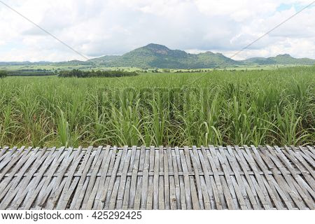 Empty Bamboo Table In Front Of Sugarcane Fields With Mountains And Blue Sky As A Backdrop. It Can Be