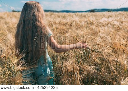 A Long-haired Fair-haired Girl Walks In A Golden Field Of Rye. View From The Back. The Freedom And J