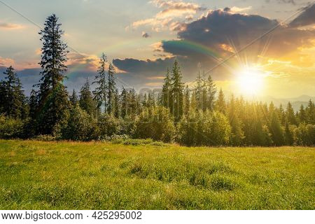 Spruce Forest On The Grassy Hillside At Sunset. Beautiful Nature Scenery In Mountains. Summer Landsc