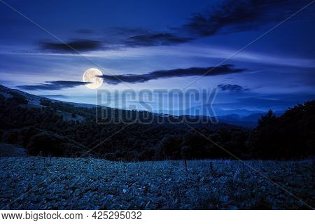 Beautiful Ukrainian Countryside At Night. Grassy Meadows And Hills Under Dark Sky. Trees On The Hill