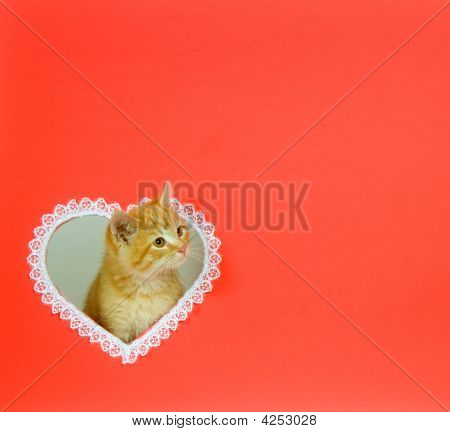 Kitten Valentine With Copy Space