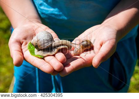 The Boy Holds In His Palms A Large Grape Snail Protruding From Its Shell.