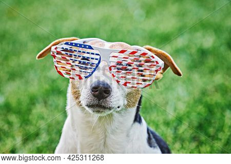 Dog Head In Big Glasses With Usa American Flag Print Close Up Portrait On Green Grass. Celebration O