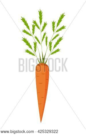Fresh Carrots With Green Leaf Tops. Vector Illustration Of A Root Crop Isolated On White.