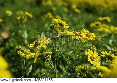 Yellow Flowers Closeup On A Blurred Floral Background. Selective Focus
