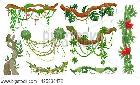 Jungle Vines. Tropical Tree Branches With Hanging Liana Ropes, Green Moss, Exotic Plant Leaves And F