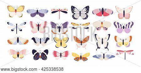 Cute Butterflies. Decorative Spring Butterfly Colorful Wings. Monarch, Moth And Dragonfly. Tropical