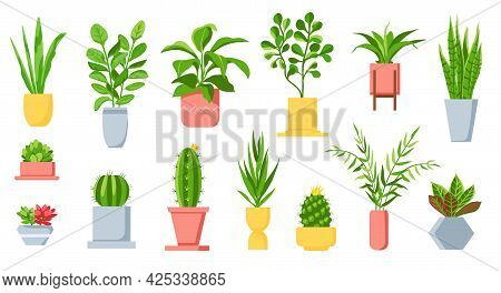 Pot Plants. House Tropical Leaves, Tree, Succulents And Cactus. Urban Jungle, Home Green Garden In F