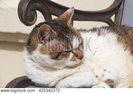 Lying Down Tabby Cat On A Bench In A Garden