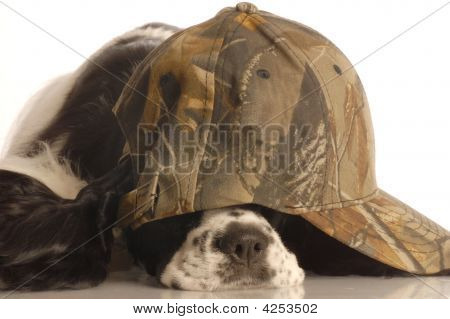 Scared Hunting Dog