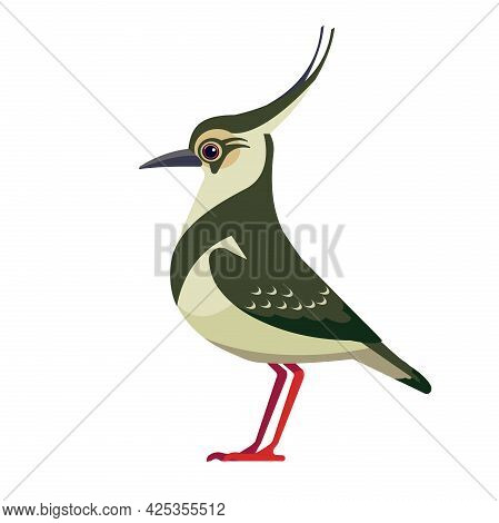 Northern Lapwing Is Pewit, Green Plover, Or Just Lapwing, Is A Bird In The Lapwing Subfamily. Bird C