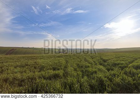 Beautiful Green Field That Ripples And The Sun Shines On Them. A Landscape Of Waves Called Moravian
