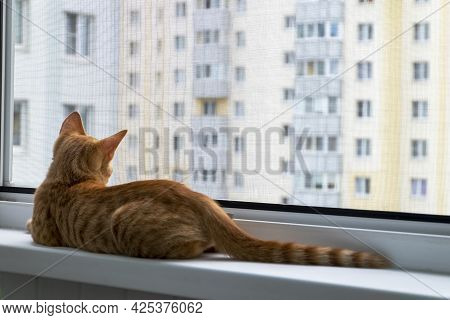 A Small Cute Ginger Tabby Kitten Sits On The Window Sill With A Protective Mosquito And Anti-vandal