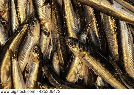 Small Silver Fish Just Caught. Marine Food For Humans. Natural Food.