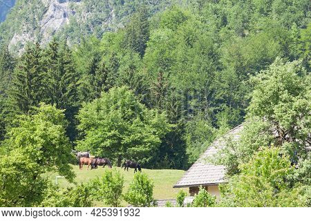 Typical Alpine Landscape With Horses Standing In A Grass Pasture Meadow In Bohinj, Slovenia, In Fron