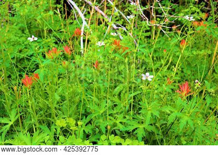 Lush Plants And Wildflowers During Spring Besides A Creek On An Alpine Meadow Taken At A Temperate F