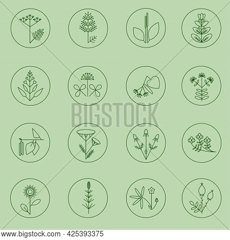 Set Of Medicinal Plants Icons. Minimalistic Plants Illustrations
