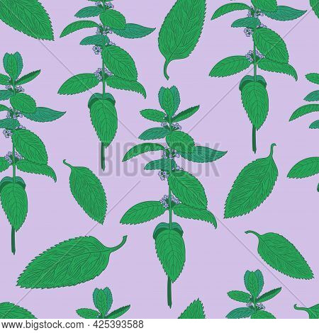 Seamless Pattern With Mint Leaves And Plants. Hand Drawing.