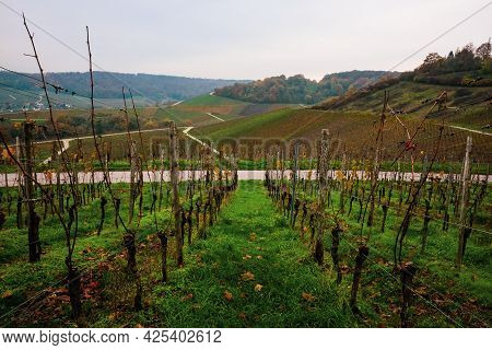 Vineyards Of The Moselle Valley In Luxembourg