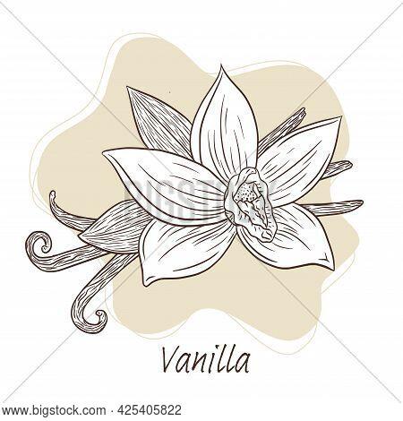 Vanilla Sticks And Flower Illustration Line Art. Hand Drawn Vanilla Blossom And Sticks Illustration