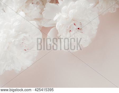 Beautiful White Peony Flowers On Pastel Pink Background. Close Up Of White Peonies Flowers. Light Ba
