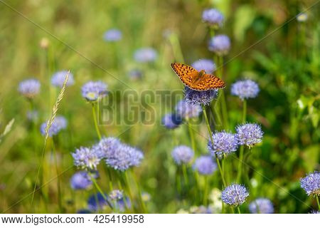 Summer Meadow With Blue Flowers And Orange Butterfly. Idyllic Summer Day.