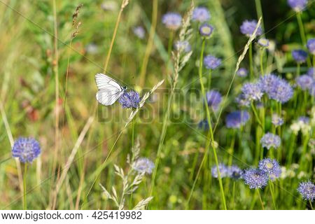 Summer Meadow With Flowers And White Butterfly. Idyllic Summer Day.