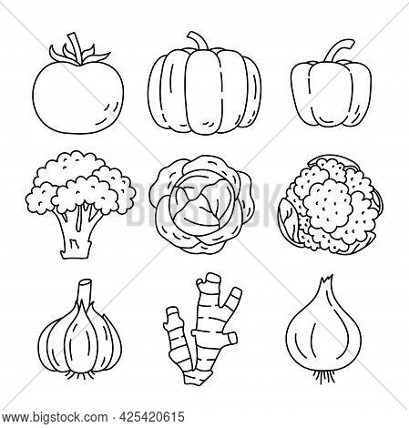 Vegetable Sketch. Tomato, Pumpkin, Pepper, Broccoli And Cabbage. Cauliflower, Garlic, Ginger And Oni