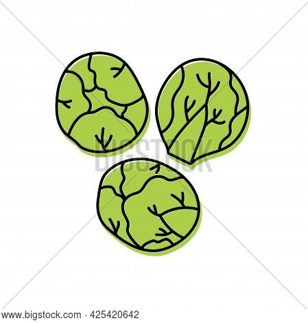 Brussels Sprouts. Vegetable Sketch. Color Simple Icon. Hand Drawn Vector Doodle Illustration