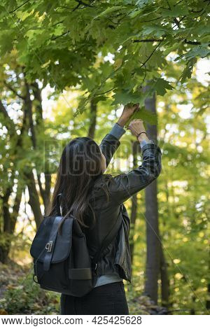 Dark-haired Girl In The Park Picks The Leaves. Young Woman Walking In The Spring Forest. Back View.