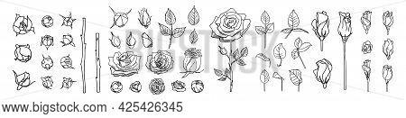 Big Set Of Line Roses And Leaves. Rose Bud Illustration. Hand Drawn Flowers. Vector Floral Elements