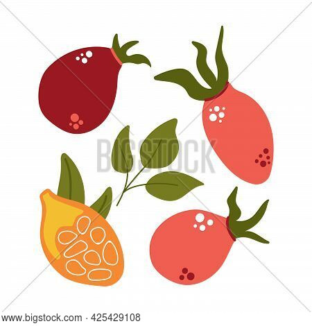 Hand Drawn Set Of Rose Hip Berries, Rose Berry With Leaves. Modern Flat Illustration.