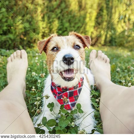 Obedient Happy Smiling Pet Dog Puppy Relaxing With His Owner In The Grass In Summer