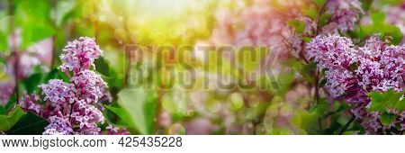 Summer Background With Branches Of Blooming Lilacs. Dreamy Gentle Air Artistic Image. Soft Focus. Na