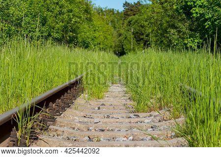 Railway Rails And Sleepers Abundantly Overgrown With Green Grass, Abandoned Railway Tracks