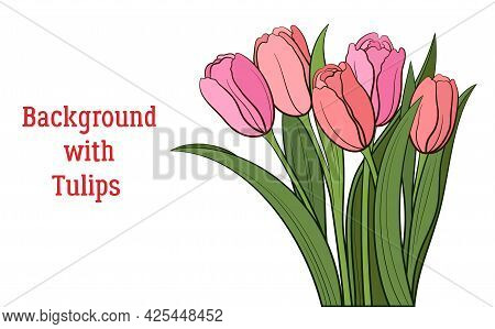 Tulips Pink And Red Flowers And Green Leaves Isolated On A White, Holiday Background. Vector