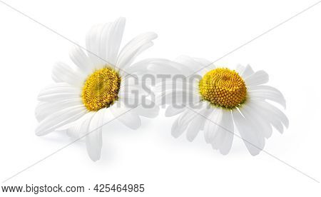 Two Chamomile Flowers Isolated On White Background, Chamomile Isolated. White Flowers
