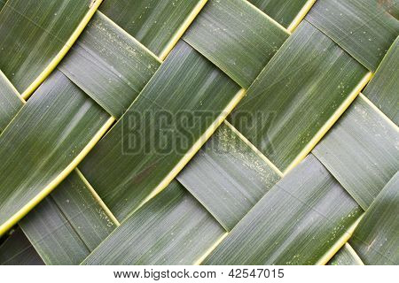 Green and fresh coconut leaves woven background poster