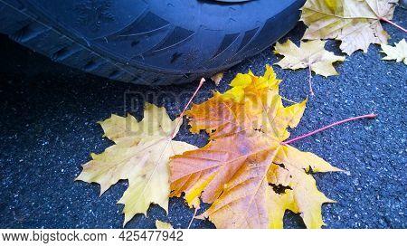 Car Wheel On Road. Close Up. Yellow Fallen Maple Leaves On Asphalt. Golden Autumn Street. Travelling