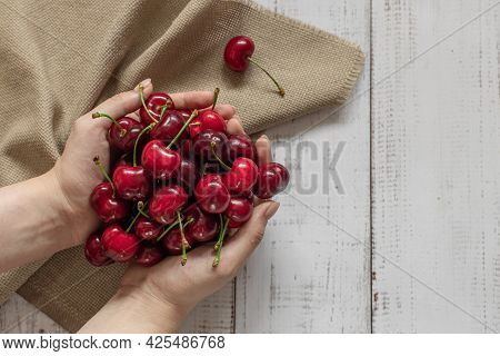 A Lot Of Ripe Red Cherries In Hands On A Rustic Background, Season For Picking Fresh Berries, Summer